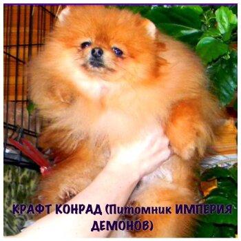 Крафт Конрад