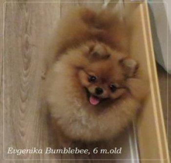 Евгеника Бамблби