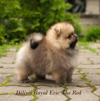 Dilina Royal Eric The Red