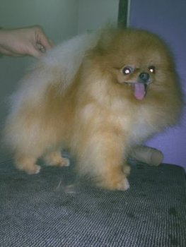 New's Pomeranian Sky