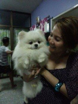 Chariowald Of Kou Ju Tsai Pet Store