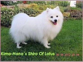 Kimo-Hana's Shiro Of Lotus