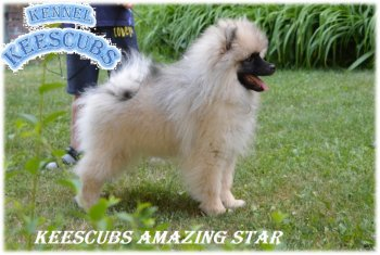 Keescubs Amazing Star