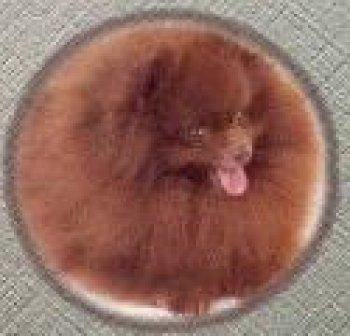 Starlite Choco's Kopy Kat