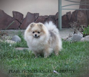 Pearl Princess Angel Of Beauty
