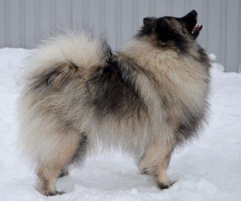 Schone Hund Yagodka Osennyaya