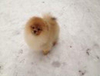 Снежная Династия Потапыч