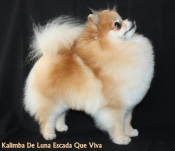 Калимба Де Луна Эcкада Кью Вива