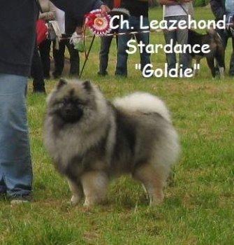 Leazehond Stardance
