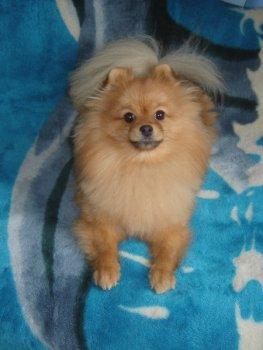 Joyful Puppy De-Luna