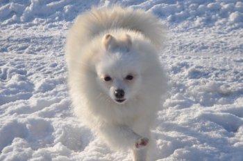 Жамалия Слава Снегов