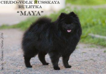 Чудо-Волк Русская Рулетка