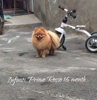Инфинити Примо Россо