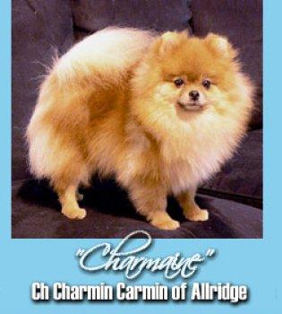 Charmin Carmin Of Allridge