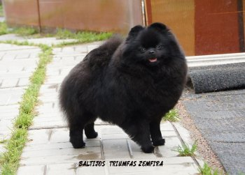 Baltijos Triumfas Zemfira