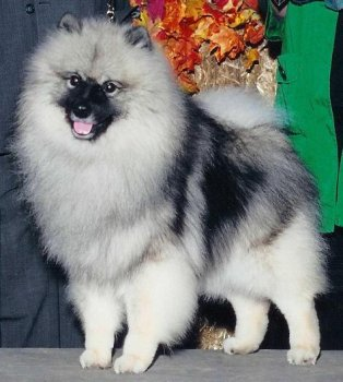 Markwright's Happiness Iz