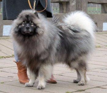 Schone Hund Felch' Harli