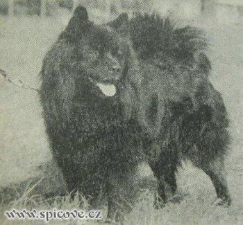 Kasian z Ticheho Haje