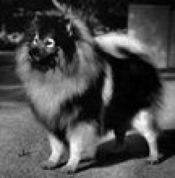 Cornelius Wrocky Selznick