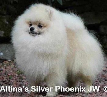Altina's Silver Phoenix