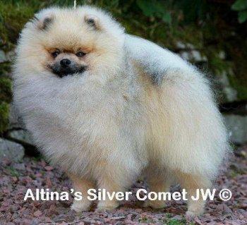 Altina's Silver Comet