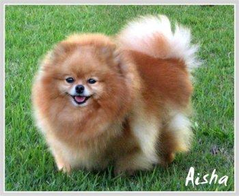Hilcrest's Aisha