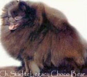 Starlite Legacy Choco Bear