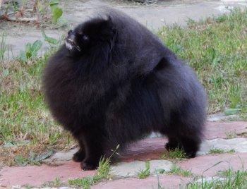 Черная Жемчужина Из Русского Двора