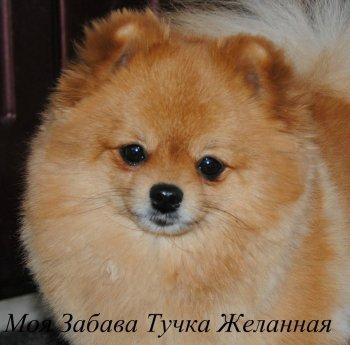 Moya Zabava Tuchka Zhelannaya