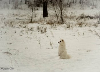 Радость Снежная Элизабет