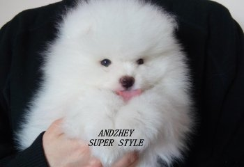 Анджей Супер Стиль