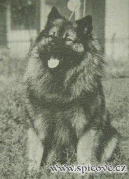 Argo Zdemilka