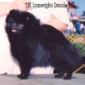 Lynnwrights Dracula