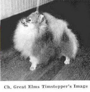 Great Elms Timstopper's Image